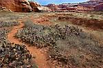The Salt Creek Trail winds through the desert of Canyonlands National Park, UT