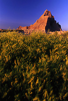SD102 pinnacle and yellow sweet clover in wind along Castle Trail, Badlands N.P., SD. Badlands National Park, South Dakota.