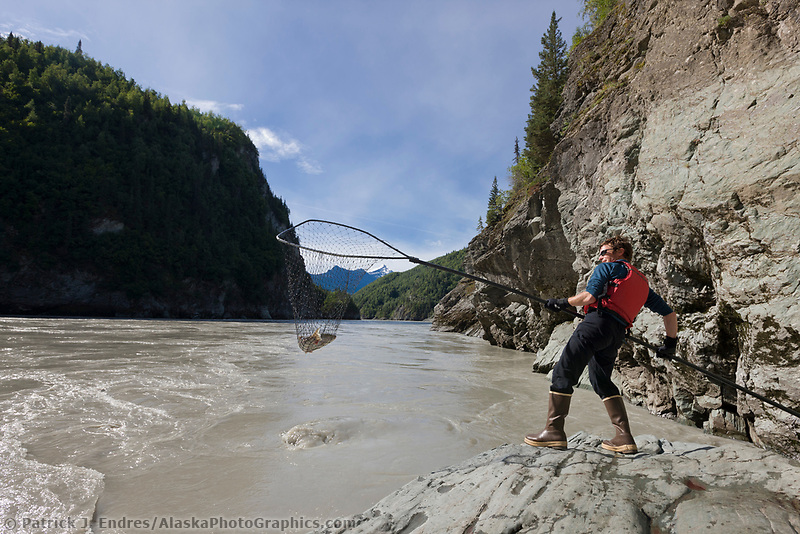 Dipnetting for sockeye salmon in the Copper river, southcentral, Alaska.