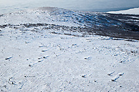 Cim Smyth runs on top of the Blueberry Hills on his way to Shaktoolik during Iditarod 2009
