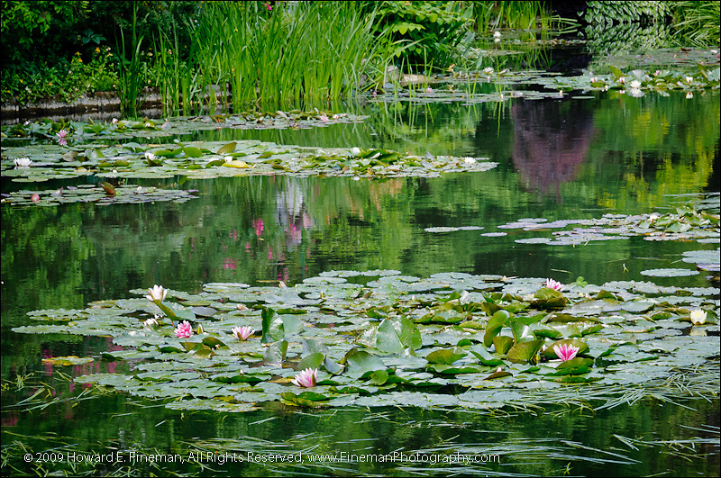Monet's Lily Pond, Giverny (3)