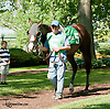 Rush Now before The Joe French Memorial Stakes at Delaware Park on 6/1/13