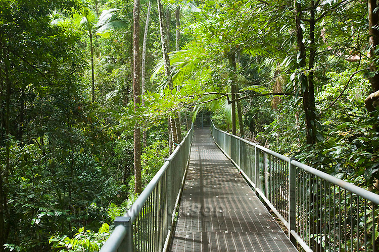 Aerial walkway at the Daintree Rainforest Discovery Centre.  Daintree National Park, Queensland, Australia