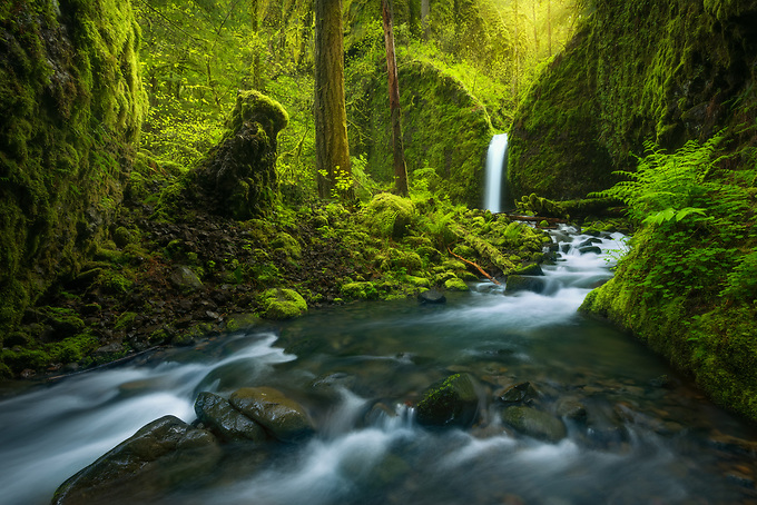 A picturesque waterfall through a rainforest environment in a remote area of Oregon's Columbia Gorge.<br />