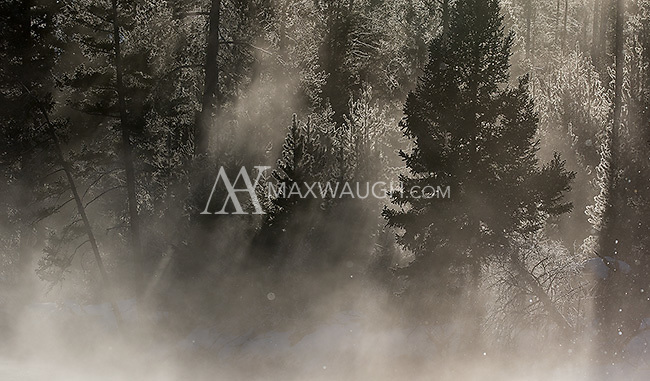 Morning light filters through trees and mist along the Madison River.