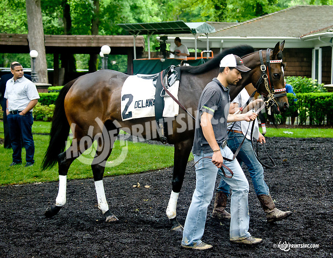 Papa's Forest before The Dashing Beauty Stakes at Delaware Park racetrack on 6/12/14