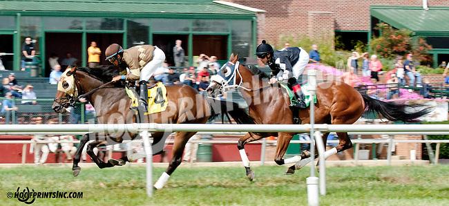 Rum Tum Tugger winning at Delaware Park on 9/26/13