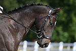 08/09/2019 - Class 3 - British dressage - Brook Farm training centre - UK