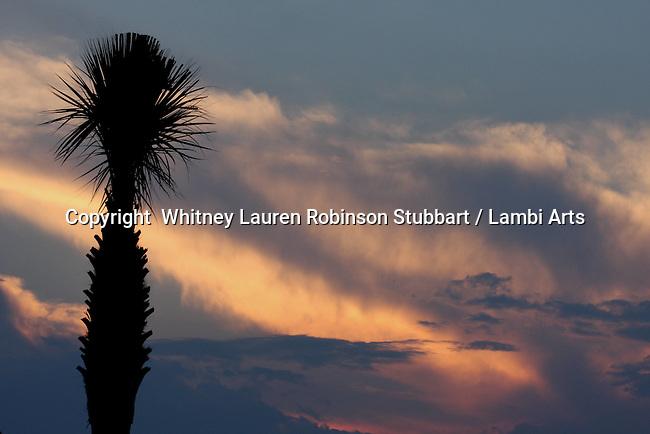Breathtaking Scenic Photography Lowcountry<br /> South Carolina, Savannah, Charleston, Inlets, sea, sunsets, boat, oyster, shells, birds, sea birds, beach, storm, palm trees, sunrise, docks, etc.