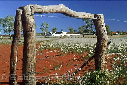 Ethabuka Homestead, on edge of Simpson Desert, Far west Queensland