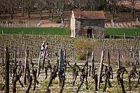 Europe/Europe/France/Midi-Pyrénées/46/Lot/Env de Luzech: Vignoble du Vin de Cahors AOC et joggueurs