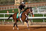 RIYADH,SAUDI ARABIA-FEB 27: Maximum Security excercises for Saudi Cup at King Abdulaziz Racetrack on February 28,2020 in Riyadh,Saudi Arabia. Kaz Ishida/Eclipse Sportswire/CSM