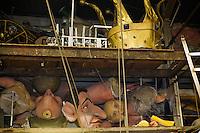 Europe/France/Provence-Alpes-Côte d'Azur/06/Alpes-Maritimes/Nice:  La Maison du Carnaval - Remise de l'Atelier de fabrication des chars