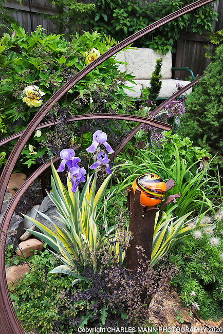 DanJohnson has embellished his Denver garden with hand made ornaments like this glass sphere supported by a metal scrap here complimented with blue flowered Iris pallida varigata.