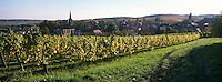 Europe/France/Alsace/67/Bas-Rhin/Cleebourg : Village et vignoble