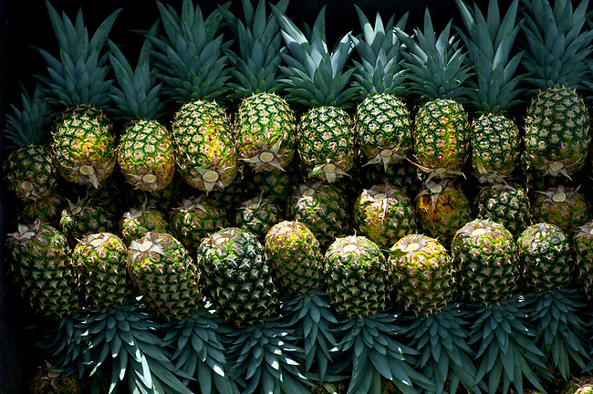 Costa Rica, La Virgen de Sarapiqui, Picked Pinapples Neatly Stacked