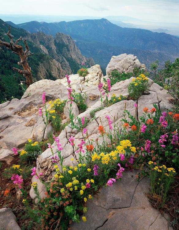 Sandia Mountain top   NEW MEXICO
