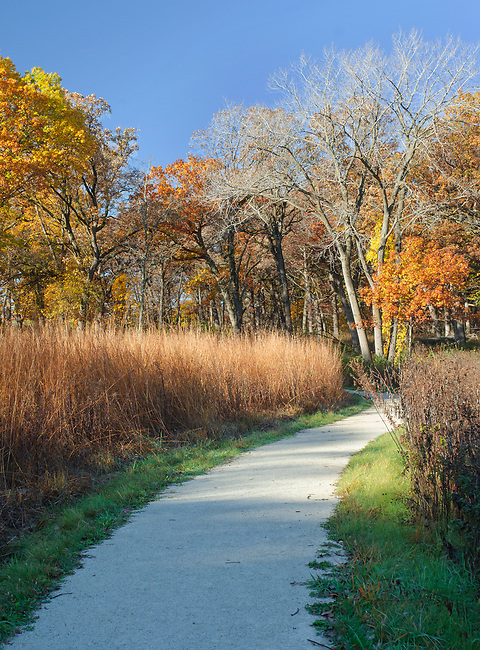 A hiking trail winds through Oldfield Oaks Forest Preserve in DuPage County, Illinois in autumn