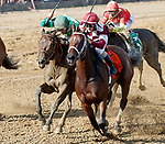 Farrell  (no. 7), ridden by Channing Hill and trained by Wayne Catalano, wins the Shuvee Stakes at Saratoga Racecourse, Saratoga Springs.   The winner finished a neck in front of Wow Cat (no. 4) in the 1 1/8 mile race against five opponents.  (Bruce Dudek/Eclipse Sportswire)