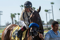 CERRITOS, CA  JULY 24: #4 Marley's Freedom, ridden by Drayden Van Dyke, receives a pat after winning the Great Lady M Stakes (Grade ll), on July 7, 2018, at Los Alamitos Race Course in Cerritos, CA. (Photo by Casey Phillips/Eclipse Sportswire/Getty Images)