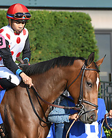 Lexington KY - October 6  Dancing was 3rd in the 66th running of the Darley Alcibiades (Grade 1).  October 6, 2017