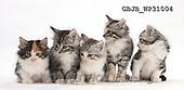Kim, ANIMALS, REALISTISCHE TIERE, ANIMALES REALISTICOS, fondless, photos+++++,GBJBWP31004,#a#