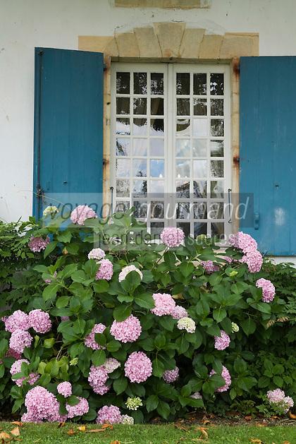 Europe/France/Aquitaine/40/Landes/ Chalosse/ Gaujacq: le Château détail d'une fenêtre avec ses hortensias