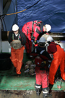 Researchers inspecting sea sponges hauled up from Bottom Trawl in Barents sea
