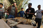 """A member of the international animal welfare charity """"Four Paws"""" checks on a sedated fox at a zoo in Rafah in the southern Gaza Strip, during the evacuation of animals from the Palestinian enclave to relocate to sanctuaries in Jordan, on April 7, 2019. Forty animals including five lions are to be rescued from squalid conditions in the Gaza Strip, an animal welfare group said. Photo by Ashraf Amra"""