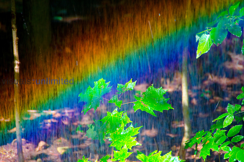 Rainbow in backyard lawn sprinkler, Kentucky, USA
