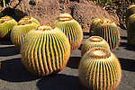 Echinocactus grusonil, Jardin de Cactus designed by César Manrique, Guatiza. Lanzarote, Canary Islands, Spain