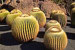 Echinocactus grusonil, Jardin de Cactus designed by César Manrique, Guatiza. Lanzarote, Canary Islands, Spain