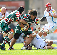 Aviva Premiership. Leicester, England. Logovi'i Mulipola of Leicester Tigers charges forward during the Aviva Premiership match between Leicester Tigers and Exeter Chiefs at Welford Road on September 29. 2012 in Leicester, England.