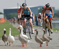 05 AUG 2006 - HOLME PIERREPONT, GBR - Geese wander into the path of cyclists during the British Club Relay Triathlon Championships (PHOTO (C) NIGEL FARROW)
