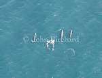 Aerial views of  a pod of Grey Whales off the Mendocino Coast of Northern California.