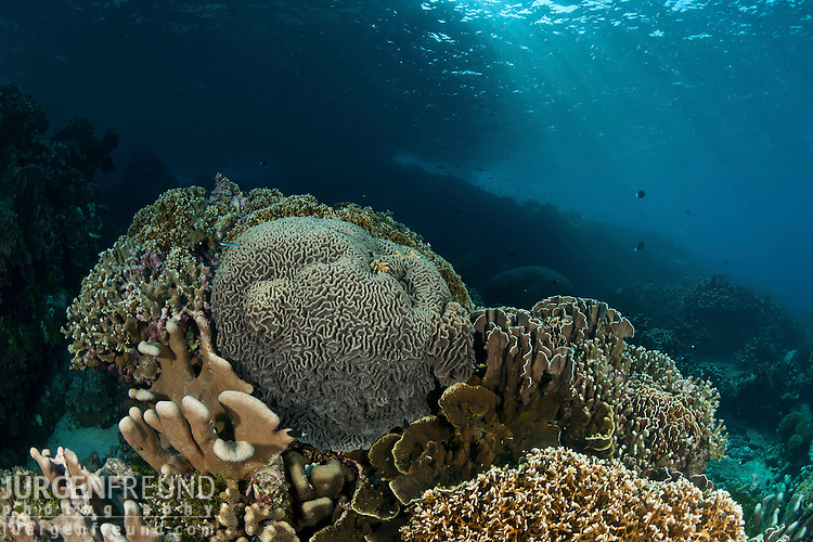 Coral Reefs.