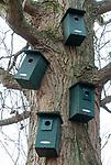 HALFWEG  - vogelhuisjes, nestkast, vogelkast op de AGC. COPYRIGHT KOEN SUYK
