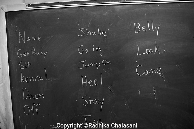 BEACON, NEW YORK:  A list of commands prisoners are expected to teach their puppies are written on a chalkboard in the Puppies Behind Bars classroom at Fishkill Correctional Facility. The dogs must learn 80 commands during their training period at the prison. The program works with prison inmates in New York, New Jersey, and Connecticut to train both explosive detection dogs and service dogs, including ones who help injured soldiers or those suffering from post traumatic stress. Fishkill Correctional Facility is a medium security prison in New York with 22 men in the puppy program.