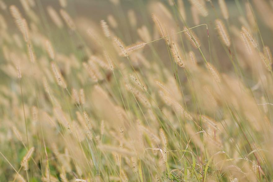 Grass, Duna Drava National Park, Mohacs, Hungary