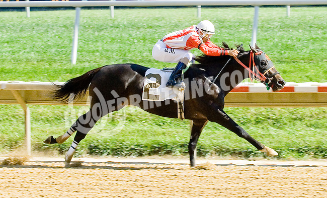 Caleb's Prayer winning at Delaware Park on 9/19/12