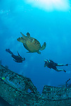 Two divers and a turtle swimming together over St Anthnys wreck Maui Hawaii.