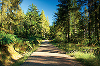 The Lime Craig Trail near Aberfoyle, Loch Lomond and the Trossachs National Park, Stirlingshire