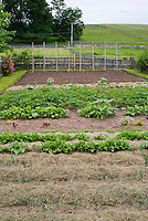 Picket fenced large vegetable garden, fruit strawberries Fragaria, mulched straw, onions, rows, garden dirt soil, tidy, orderly, fenced with wooden pickets, potato plants, pole staking, newly planted crops, mixture of variety of types