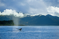 Humpback whale sounds in the sunny waters of Prince William Sound, Alaska