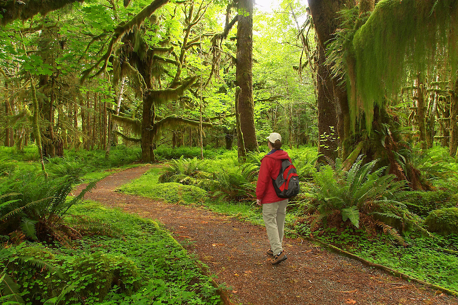 Woman hiking through rain forest on Maple Glade Rain Forest Trail, Quinault Rain Forest, Olympic National Park, Olympic Peninsula, Grays Harbor County, Washington, USA