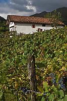 Europe/France/Aquitaine/64/Pyrénées-Atlantiques/Pays-Basque/Sare: La Maison Ortillopitz et sa vigne