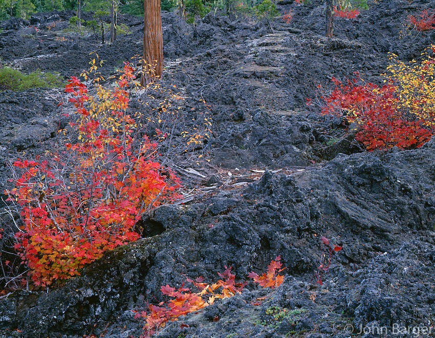 ORCAC_064 - USA, Oregon, Willamette National Forest, Autumn-colored vine maple and scattered conifers grow on an old lava flow in Upper McKenzie Valley.