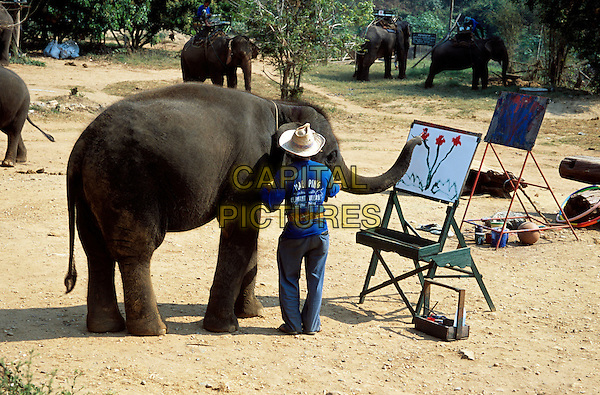 Elephant painting, Mae Ping Elephant Training Camp, Mae Ping, near Chiang Mai, Northern Thailand