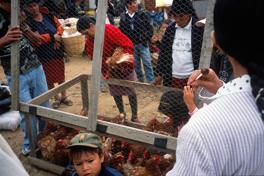 "Locals examine chickens for sale in the local produce market in Vallegrande, Bolivia Sunday, Nov. 14, 2004. Ernesto ""Che"" Guevara was captured by the Bolivian army in 1967 in a nearby valley and executed in La Higuera days later. His body was put on public display in the laundry room of the Vallegrande hospital, then secretly buried under the air strip for 30 years. Guevara and fellow communist guerillas were attempting to launch a continent-wide revolution modeled on Guevara's success in Cuba in the late 1950s. The Bolivian government recently began promoting the area where he fought, was captured, killed and burried for 30 years as the ""Ruta del Che,"" or Che's Route. (Kevin Moloney for the New York Times)"
