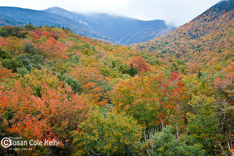 Fall foliage on Mt LaFayette in White Mountain National Forest, NH, USA
